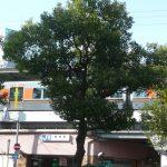 現地徒歩5分のJR環状線福島駅(周辺)